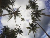 Drzewa i niebo Fotografia Stock