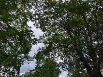 Drzewa i niebo przy naturą obraz stock