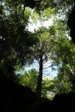 Drzewa i niebo widzieć above ampuła Zdjęcia Stock