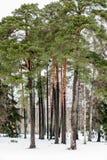 Drzewa i śnieg obrazy royalty free