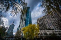 Drzewa i nowożytni budynki przy Harbourfront w Toronto, Ontar Obrazy Stock