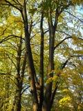 Drzewa i parasol jak gałąź zdjęcia royalty free