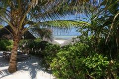 Drzewa i plaża zdjęcia royalty free