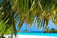 Drzewa i plaże przy Maldives Zdjęcie Royalty Free