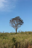 Drzewa i pola Obrazy Royalty Free
