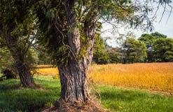 Drzewa i pole w Maryland Zdjęcia Royalty Free