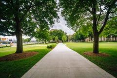 Drzewa i przejście przy Massachusetts Institute Of Technology, Zdjęcia Royalty Free