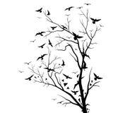 Drzewa i ptaki zdjęcia royalty free