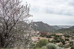 Drzewa i pustyni monaster Zdjęcie Royalty Free
