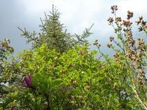 Drzewa i raincloud w świetle słonecznym obrazy royalty free