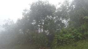 Drzewa i roślinność wzdłuż wąski wijący niewygładzonego w górzystej prowinci na mglistym dniu zdjęcie wideo