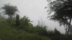 Drzewa i roślinność wzdłuż wąski wijący niewygładzonego w górzystej prowinci na mglistym dniu zbiory wideo