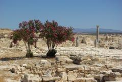 Drzewa i ruiny Zdjęcia Stock