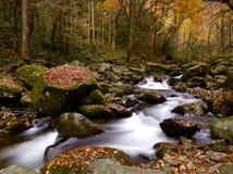 Drzewa i rzeka Obrazy Stock