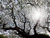 Drzewa i słońca światło Obraz Stock