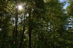Drzewa i słońce Fotografia Royalty Free