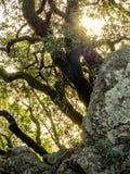Drzewa i skały w górkowatej łące Fotografia Royalty Free