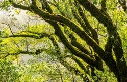 Drzewa i skały w górkowatej łące Obraz Royalty Free