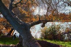 Drzewa i staw w miasto parku zdjęcia stock