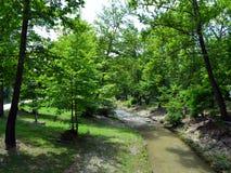 Drzewa i strumień Obrazy Stock