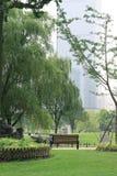 Drzewa i trawa Zdjęcie Royalty Free