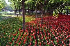 Drzewa i tulipany zdjęcia royalty free
