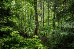 Drzewa i ulistnienie przy krawędzią las fotografia stock