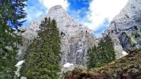 Drzewa i wiecznozieloni lasy na skłonach między Churfirsten pasmem górskim Walensee jeziorem i - kanton St Gallen, Switzer zdjęcia stock