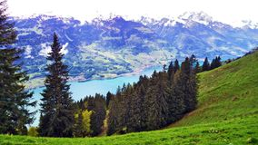 Drzewa i wiecznozieloni lasy na skłonach między Churfirsten pasmem górskim Walensee jeziorem i - kanton St Gallen, Switzer obraz stock