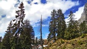 Drzewa i wiecznozieloni lasy na skłonach między Churfirsten pasmem górskim Walensee jeziorem i - kanton St Gallen, Switzer zdjęcie royalty free