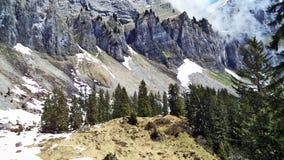 Drzewa i wiecznozieloni lasy na skłonach między Churfirsten pasmem górskim Walensee jeziorem i - kanton St Gallen, Switzer zdjęcie stock