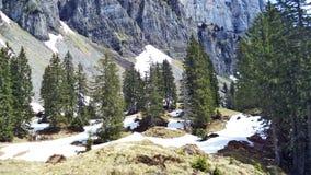 Drzewa i wiecznozieloni lasy na skłonach między Churfirsten pasmem górskim Walensee jeziorem i - kanton St Gallen, Switzer obrazy royalty free