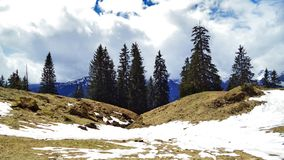 Drzewa i wiecznozieloni lasy na skłonach między Churfirsten pasmem górskim Walensee jeziorem i - kanton St Gallen, Switzer obrazy stock