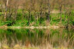 Drzewa i woda Obrazy Stock