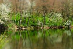 Drzewa i woda Obraz Royalty Free