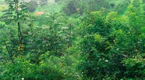 Drzewa i wysoka trawa Obrazy Royalty Free