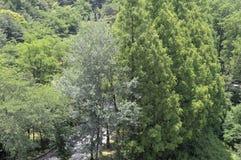 Drzewa i wysoka trawa Fotografia Stock