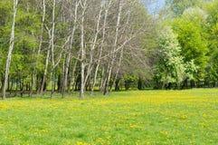 Drzewa i zielona trawa Zdjęcia Stock