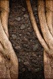 Drzewa i ziemi tekstura Zdjęcie Royalty Free