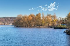 Drzewa jeziorem obraz stock