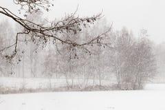 Drzewa jeziorem w gęstym opadzie śniegu obrazy royalty free