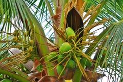drzewa kokosowe Zdjęcie Royalty Free