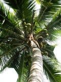 drzewa kokosowe Obraz Royalty Free
