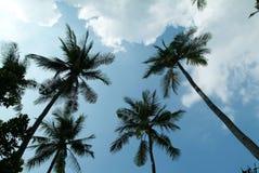 drzewa kokosowe Obrazy Stock