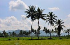 drzewa kokosowe tropikalne Obrazy Royalty Free