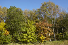 Drzewa - krawędź drewno przy jesienią Zdjęcia Royalty Free