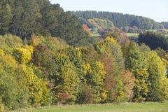 Drzewa - krawędź drewno przy jesienią Zdjęcia Stock