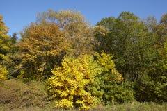 Drzewa - krawędź drewno przy jesienią Zdjęcie Stock