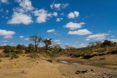 Drzewa kształtują teren w Afryka sawanny krzaku Zdjęcie Stock