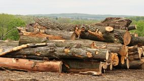 Drzewa które powalać rozjaśniać ziemię dla nowego postępu i cięli w bele Zdjęcia Royalty Free